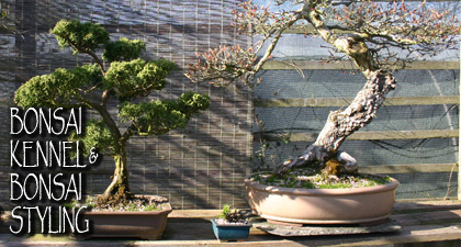 Bonsai Kennelling & Bonsai Styling